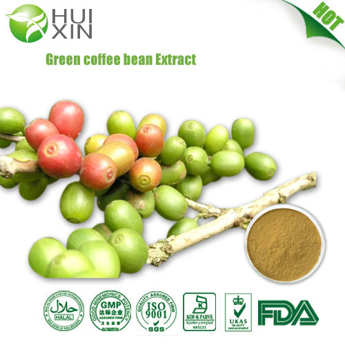 Green Coffee Bean Extract Global Supplier Of Plant Extract